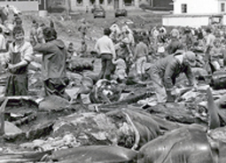 11986 towns-people-gather-for-butchering-of-pilot-whales